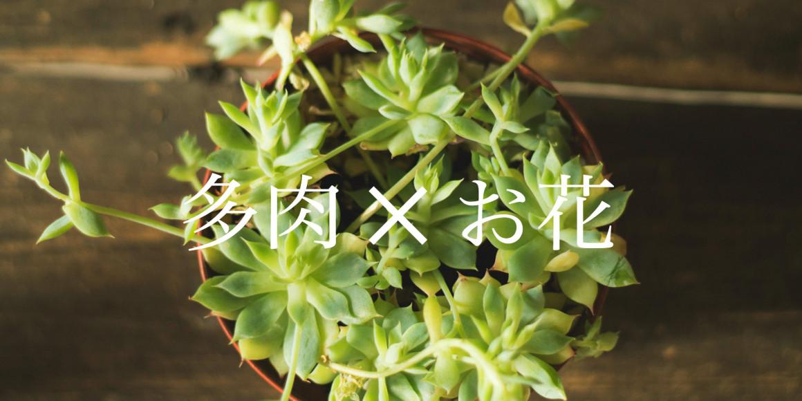 多肉植物とお花